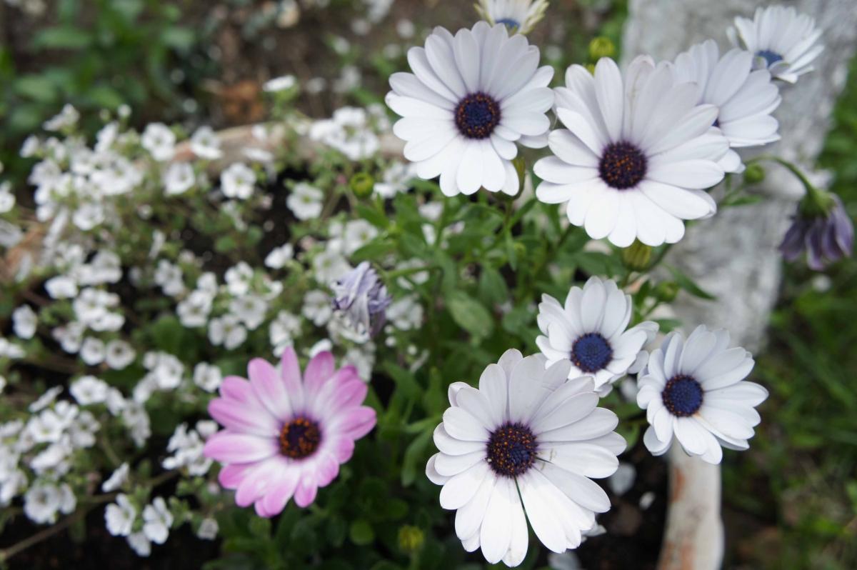 kwiat13