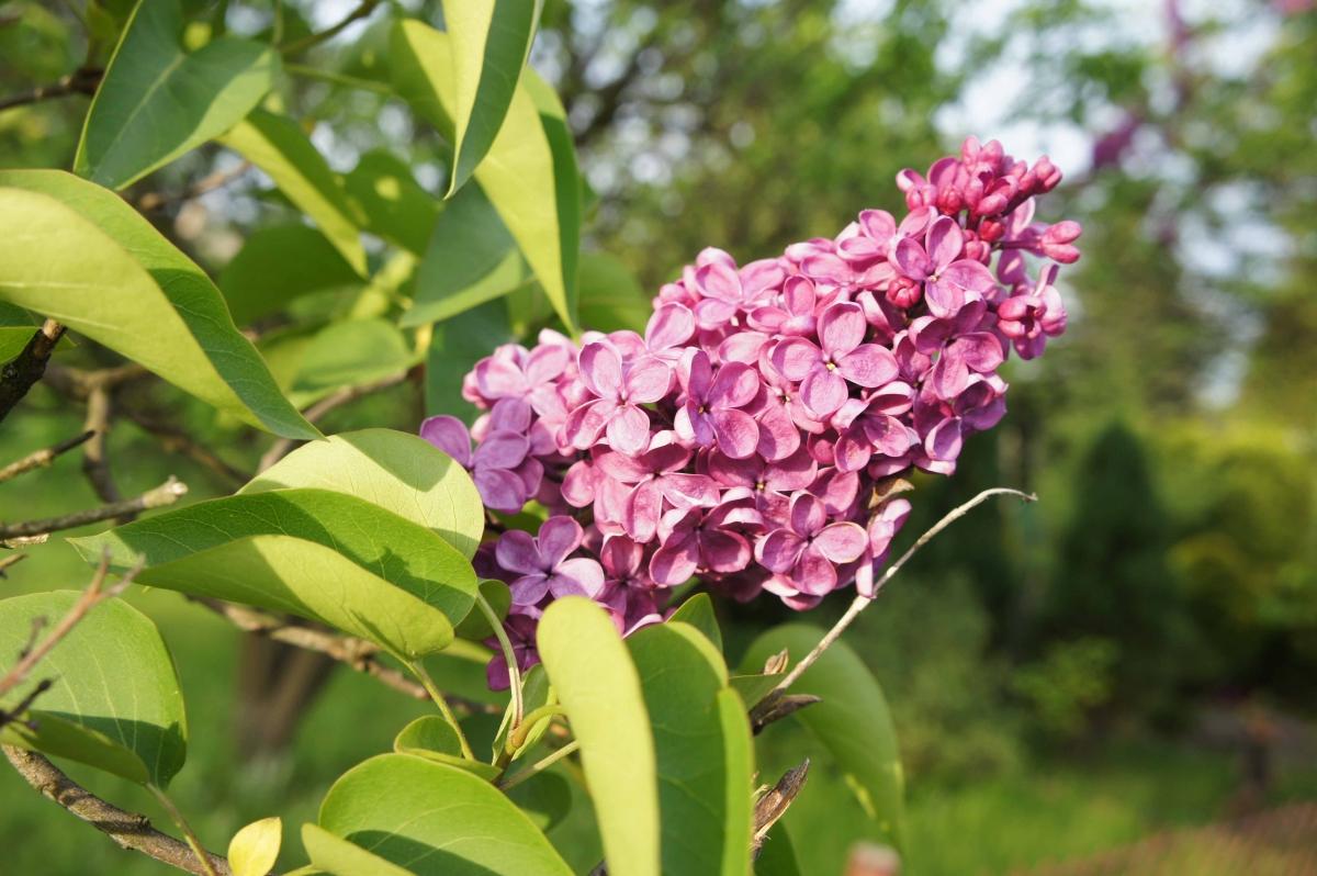 kwiat14