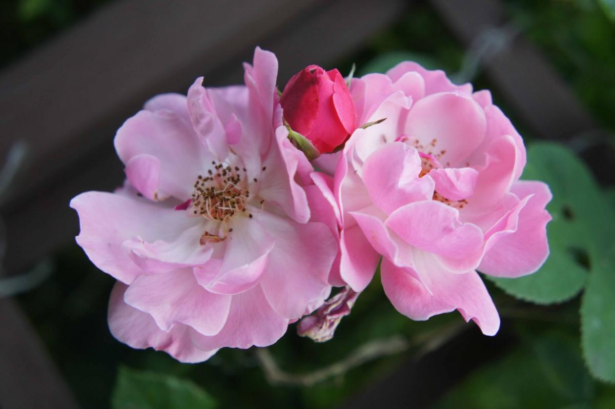 kwiat4