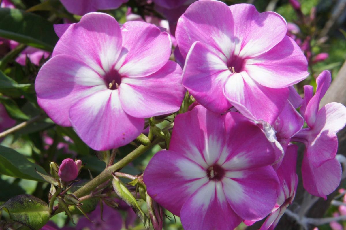 kwiat7