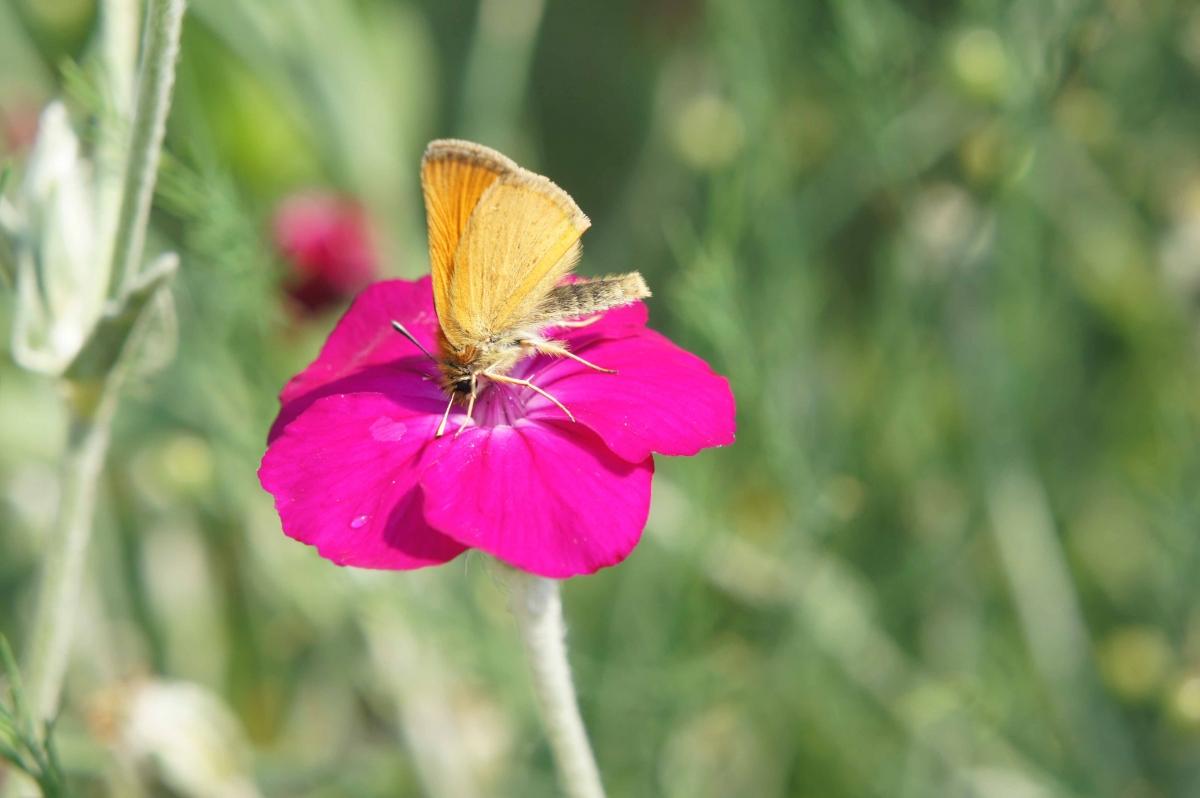 kwiat8